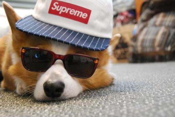在时髦这件事情上,你真的连狗都比不过了